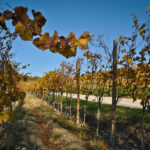 Les 17 meilleurs vins de Slovénie
