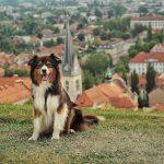 20 conseils pour voyager en Slovénie avec un chien