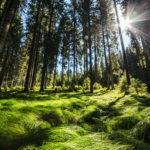 Les 3 plus belles randonnées du plateau de Pokljuka