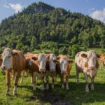 5 logements agréables dans le village le plus authentique du lac de Bled