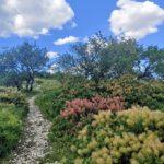 Les belles randonnées méditerranéennes avec vue sur la Croatie