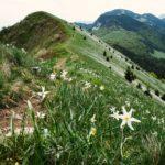 34 témoignages de Français venus en vacances en Slovénie